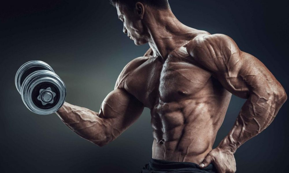 Pin on Musculatura